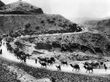 A Camel Caravan on the Khyber Pass on the Northwest Indian Frontier, ca 1930s Photo