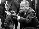 Pres Lyndon Johnson Pulls Ears of One of His Pet Beagles to Arouse a Yelp for White House Visitors Posters