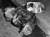 A Loyal Chicago Dog Named Queenie, Guards Her Master in Gutter of Chicago Street, Oct 14, 1951 Photographie