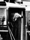 Pres Ford Bumps Head on Helicopter Door on White House Lawn, Oct 22, 1974 Photographic Print