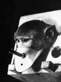 Rhesus Monkey Forced to Breath Cigarette Smoke in Russian Professor Georgy Georgadze's Experiment Photographic Print