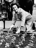 Lady Bird Johnson Planting Pansies on the Famed Capitol Mall Photo