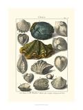 Dezallier - Seaside Treasures IV Plakát