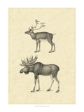 Vintage Elk Posters by  Vision Studio