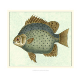 Butterfly Fish II Posters by  Vision Studio