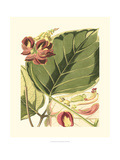 Fantastische Botanik I Kunstdrucke von  Vision Studio