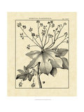 Vintage Botanical Study I Giclee Print by Sellier 