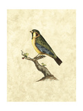 Selby Birds II Print by John Selby