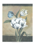 White Tulips I Premium Giclee Print by Marietta Cohen