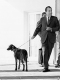 Richard Nixon with His Six Month Old Irish Setter, King Timahoe Photographic Print