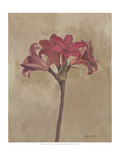 Blooms and Stems III Premium Giclee Print by Marietta Cohen