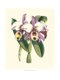 Magnificent Orchid I Prints by  Vision Studio