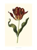 Vintage Tulips II Giclee Print by Vision Studio