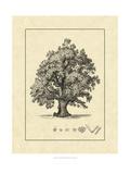 Vintage Tree III Posters by  Vision Studio