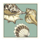 Shell Trio on Blue III Posters by Megan Meagher