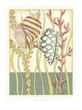 Shell Season II Print by Chariklia Zarris