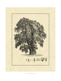Vintage Tree IV Prints by  Vision Studio