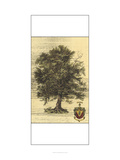 Rustic Tree II Prints by  Vision Studio