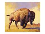 Tatanka Prints by Julie Chapman