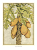 Graphic Palms I Giclee Print by Jennifer Goldberger