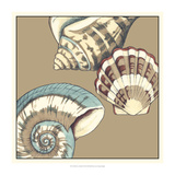 Shell Trio on Khaki II Prints by Megan Meagher