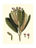 Buchoz Leaves I Giclee Print by Vision Studio