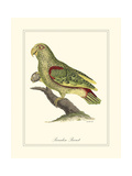 Paradise Parrot Giclee Print by George Edwards