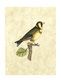Selby Birds I Prints by John Selby