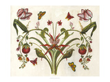 Botanical Hybrid II Posters by Naomi McCavitt
