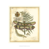 Regal Dragonfly IV Prints by  Vision Studio