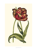Vintage Tulips VI Art by  Vision Studio
