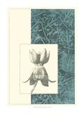 Embellished Nature's Vignette II Prints by  Vision Studio