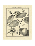 Vintage Botanical Study III Giclee Print by Sellier 