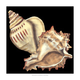 Tandem Shells I Prints by Jennifer Goldberger
