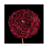 Dramatic Blooms III Print by  Vision Studio