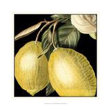 Dramatic Lemon Print by  Vision Studio