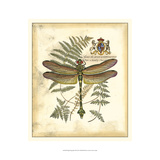 Regal Dragonfly III Print by Vision Studio