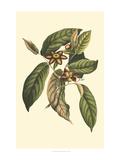 Flourishing Foliage IV Prints by  Vision Studio