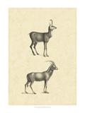 Vintage Antelope Prints by  Vision Studio
