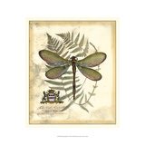 Regal Dragonfly II Prints by  Vision Studio