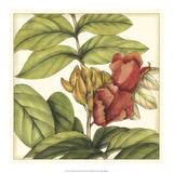 Tropical Blooms and Foliage III Art by Jennifer Goldberger