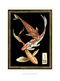 Koi Fish on Black II Print by Chariklia Zarris