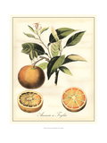 Tuscan Fruits III Giclee Print by Vision Studio