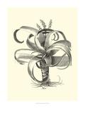 B&W Besler Aloe Prints by Besler Basilius