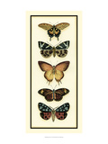 Butterfly Collector V Print by Chariklia Zarris