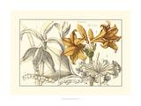 Embellished Arena Botanical II Prints by  Arena