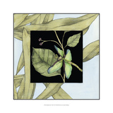 Dragonfly Inset VI Print by Jennifer Goldberger