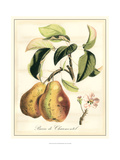Tuscan Fruits IV Prints by Vision Studio