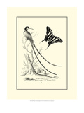 B&amp;W Long. Tailed Hummingbird (1742) Giclee Print by George Edwards