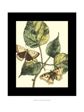Butterflies and Leaves II Posters by Megan Meagher